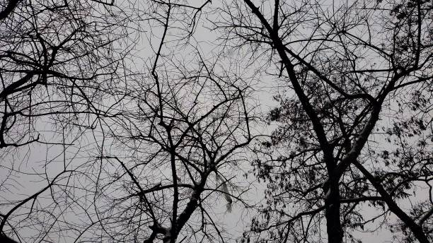 Spooky bare branches in grey sky stock photo