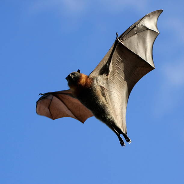 Spooky Bat stock photo