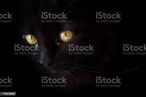 Spooky black halloween cat picture id176018067?b=1&k=6&m=176018067&s=612x612&h=hjofhmrlorilfgozqqhpojotyah5ypq2 r8rtsk4aeg=