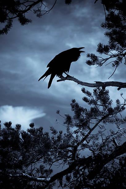Spooky Croaky Raven stock photo