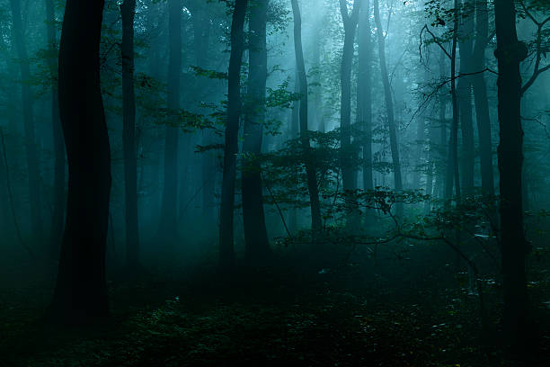 spooky dark forest at night in moonlight - trees in mist stock pictures, royalty-free photos & images
