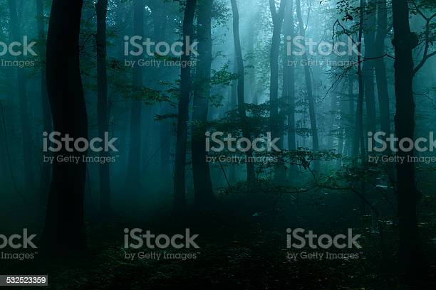 Photo of Spooky Dark Forest at Night in Moonlight