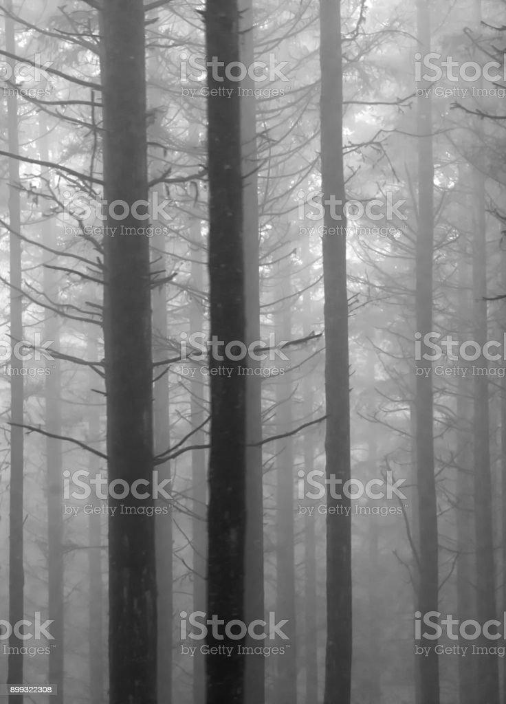 spooky dark forest with fog - monochrome stock photo