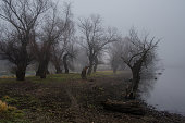 Spooky dark landscape showing forest and the river shore on a cold winter day.