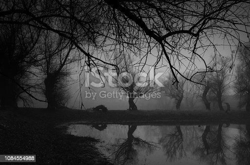 Spooky dark landscape showing forest and the river on a cold winter day.