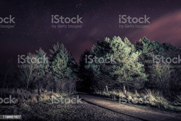 Photo of A spooky dreamy forest pathway opening, shot at night with subtle light