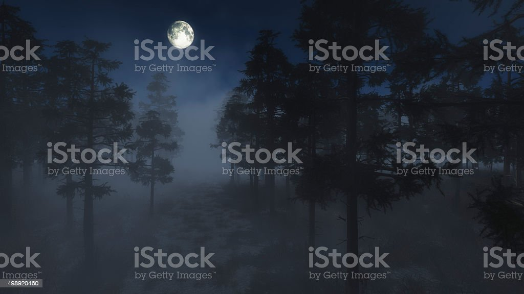Spooky foggy pine forest in moonlight. stock photo