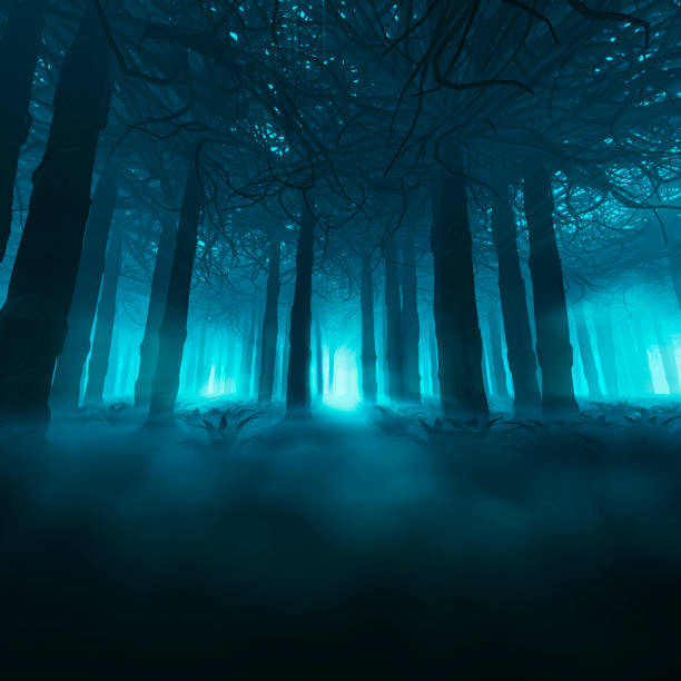spooky forest concept - trees in mist stock pictures, royalty-free photos & images