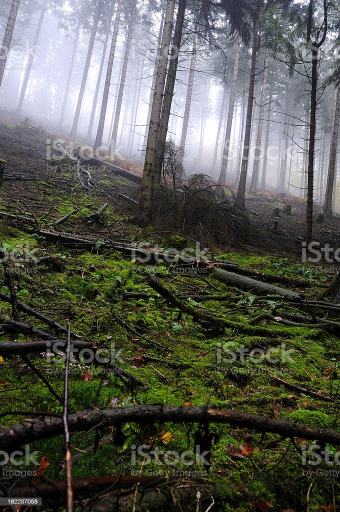 Spooky forest with fog and moss. royalty-free stock photo