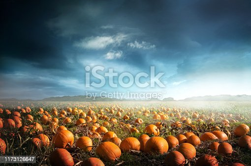 A spooky halloween pumpkin field with a moody sky. Photo composite.