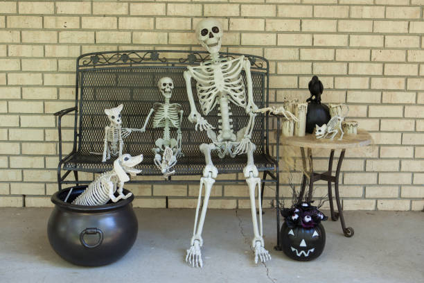 Spooky Halloween skeleton decorations Halloween skeletons and decorations on a porch bench. cat skeleton stock pictures, royalty-free photos & images