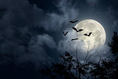 Dramatic Halloween sky with full moon, bats and trees silhouette
