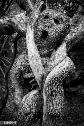 Very old tree strangled by very old grape vines the diameter of your arm. I added the facial features, but the rest is as it was found. Great for Halloween themes.