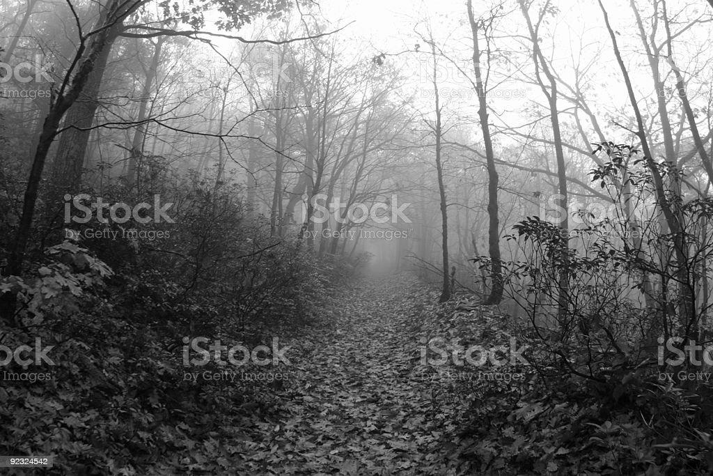 spooky path royalty-free stock photo
