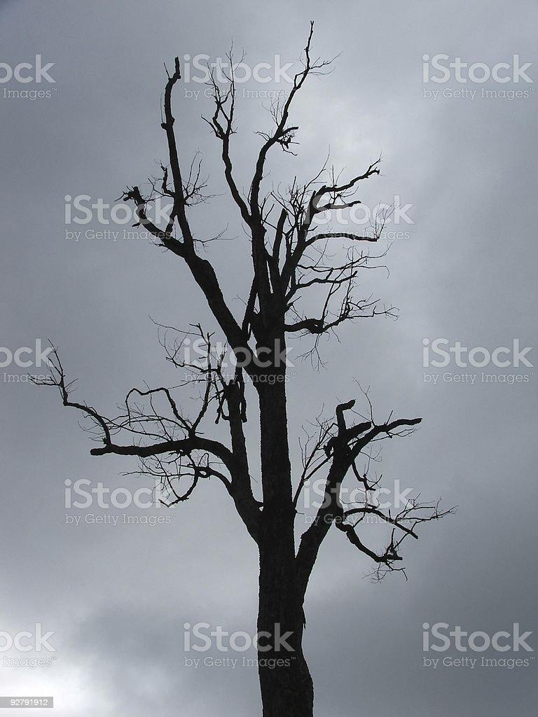 Spooky royalty-free stock photo