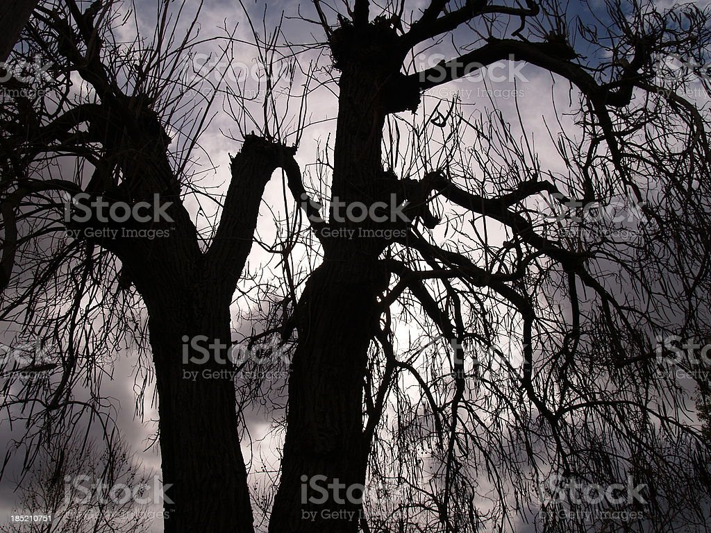 Spooky scene tree silhouette stock photo