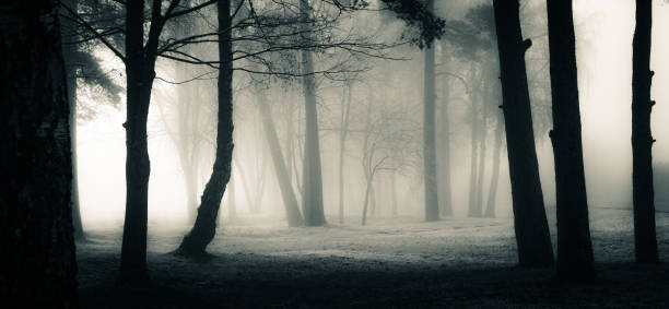 A spooky scenery of a trees. Halloween themed landscape. stock photo