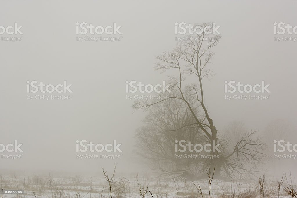 Spooky tree on very foggy winter morning. royalty-free stock photo