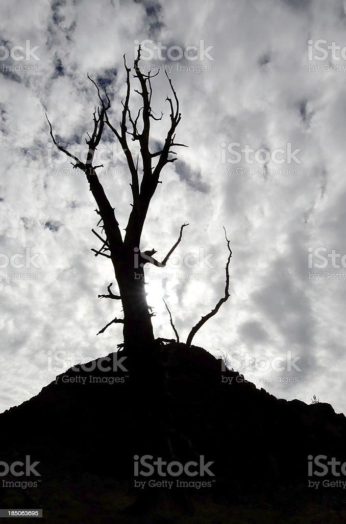 Spooky tree royalty-free stock photo