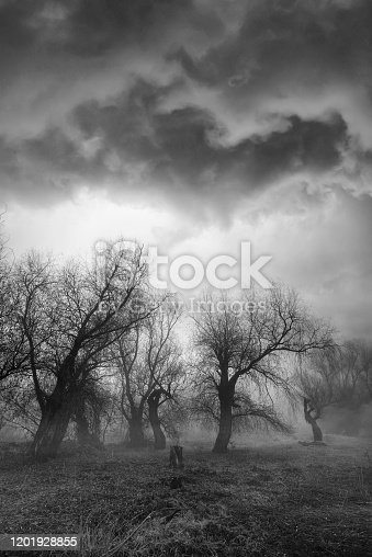 Spooky winter landscape showing old forest on a misty day.