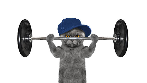 Sport. Cat is going to do exercise with weight stock photo