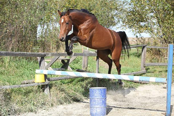 Sport horse jumping in freedom picture id177806782?b=1&k=6&m=177806782&s=612x612&w=0&h=tlnfkxtneonzsls7v qzyf vcwppzqu07mbrtqbqjym=