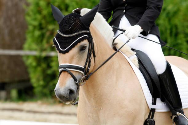 Sport horse portrait during dressage competition picture id1072669456?b=1&k=6&m=1072669456&s=612x612&w=0&h=rzntjrcr6f1bniz8cjtzijprliqa6wpdjmmkldqh6kw=