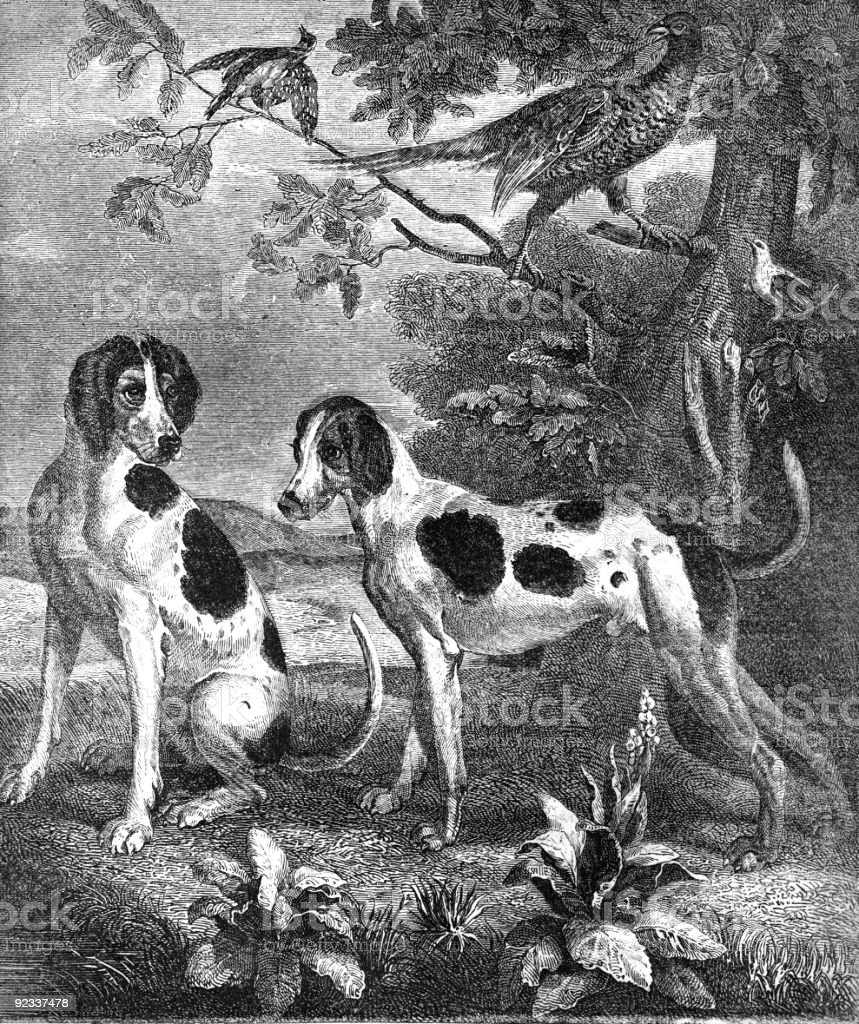 sporting dogs stock photo