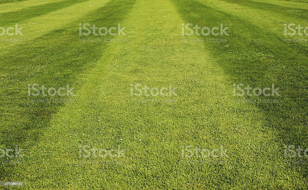 Sports Grass royalty-free stock photo