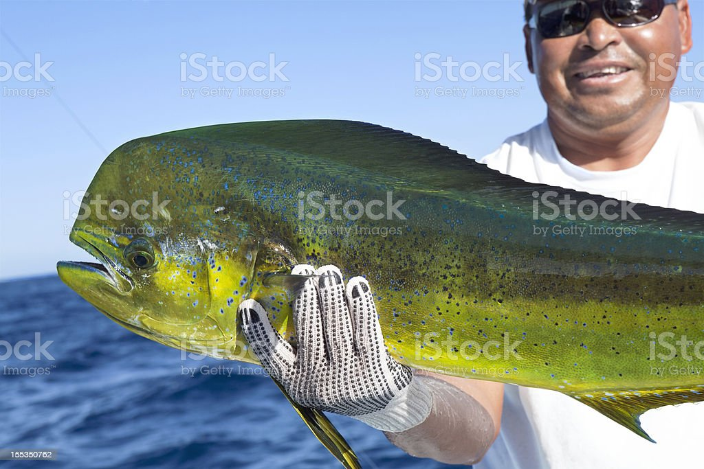 Sports,Dorado, successful day of fishing stock photo