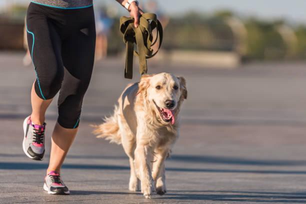 Sportswoman jogging with dog picture id923441564?b=1&k=6&m=923441564&s=612x612&w=0&h=r7srhvcew 0toesadvgomt7m6hctp yvdkr ifxvwpm=