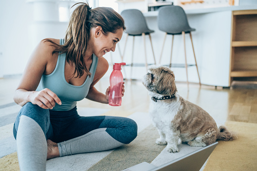 Beautiful young woman and her cute pet dog doing workout at home. Woman doing exercises while watching workout video. Young woman sitting in front of her laptop and watching online sport lessons. Woman exercising and watching online fitness live streaming classes.