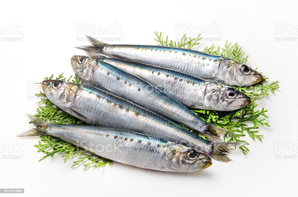 Spotlined sardines on a white background stock photo