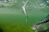 Spotted Bass Fishing