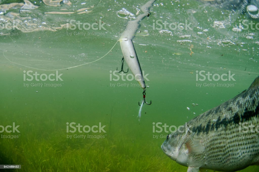 Spotted Bass Fishing stock photo