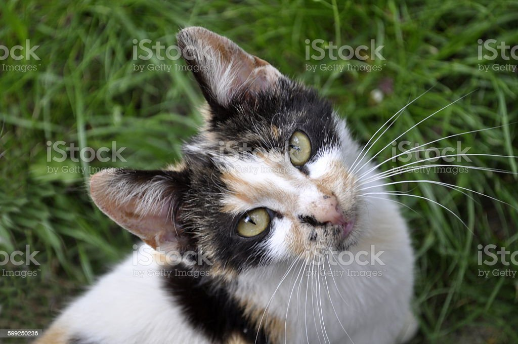 spotted cat looking up royalty-free stock photo