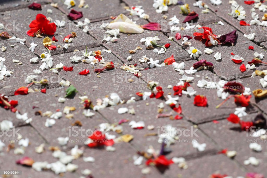 Spotted flowers on the sidewalk stock photo
