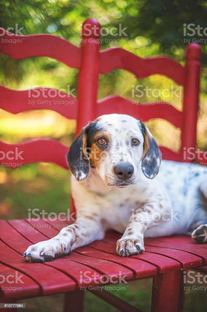 Spotted Mixed Breed Puppy stock photo