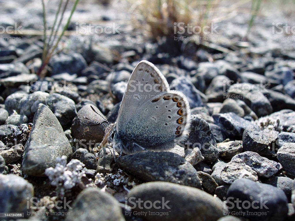 spotted moth royalty-free stock photo