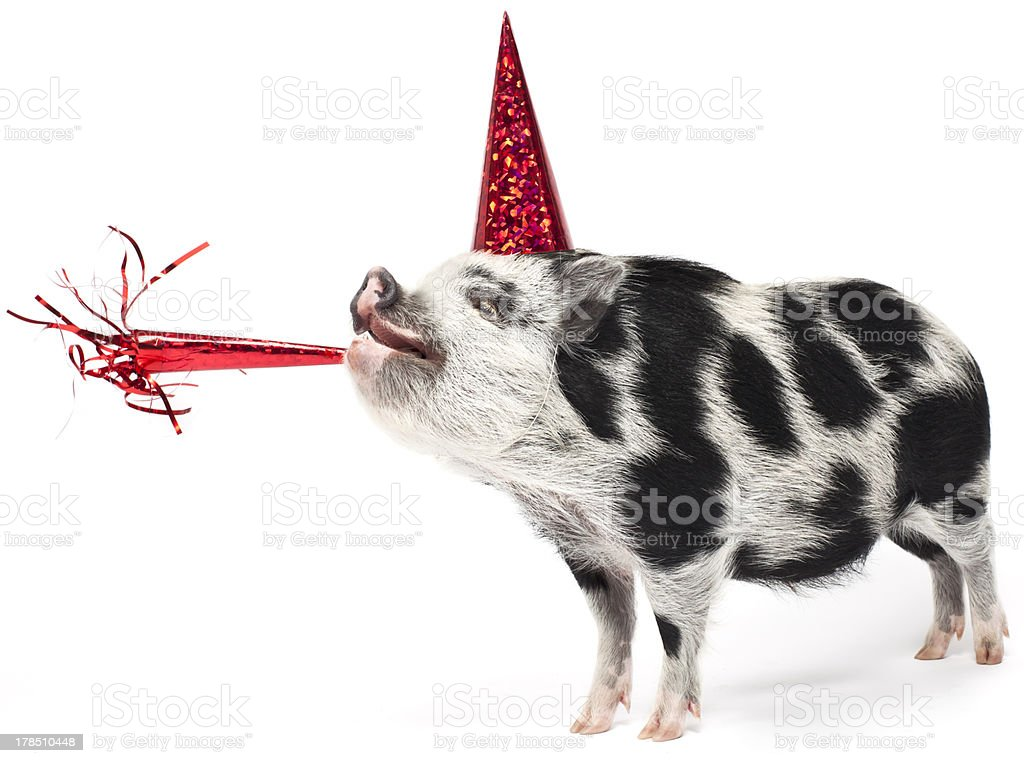 Spotted pig wearing a party hat with noise maker stock photo