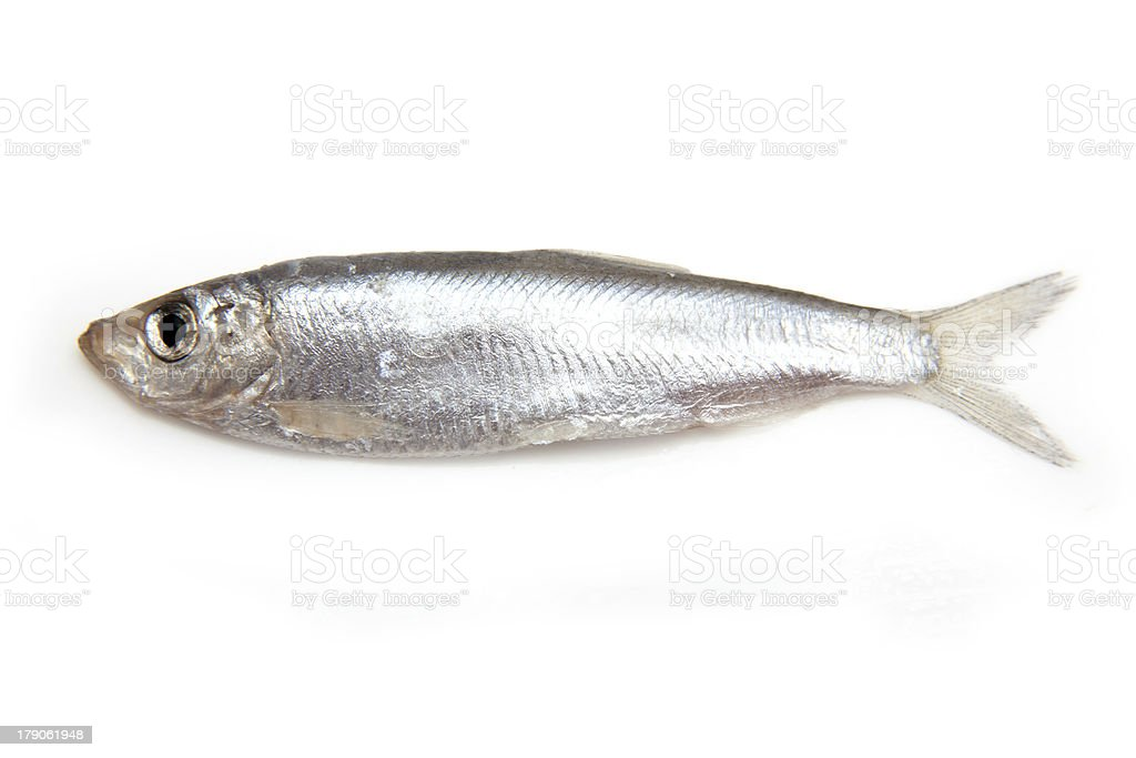 Sprat a small oily fish isolated on white. stock photo