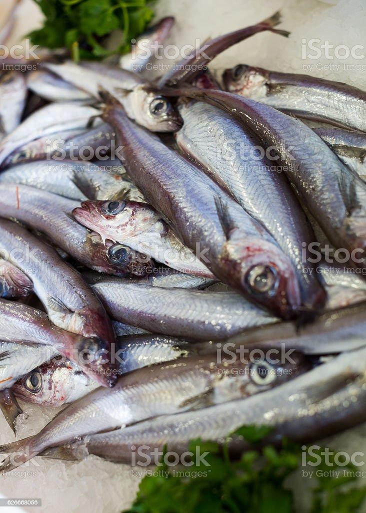 sprat fishes market - foto de acervo