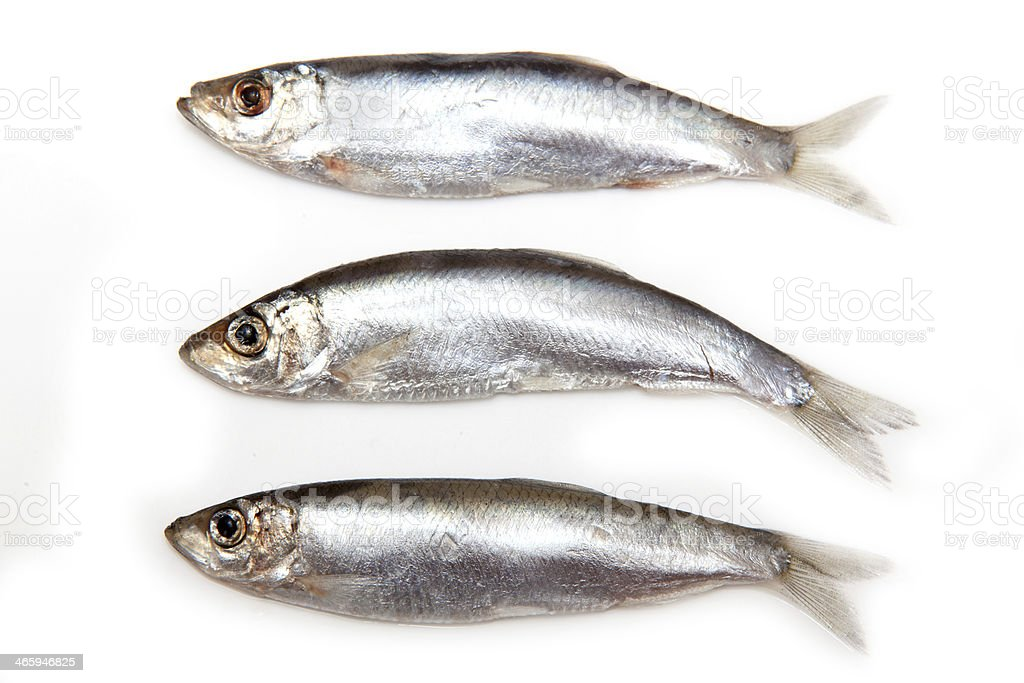 Sprats a small oily fish isolated on a white background stock photo