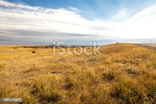 Golden grasses stretch as far as the eye can see in North Dakota's Theodore Roosevelt National Park.