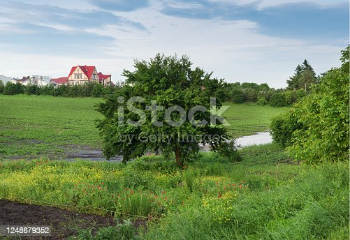 sprawling tree and village landscape on the horizon