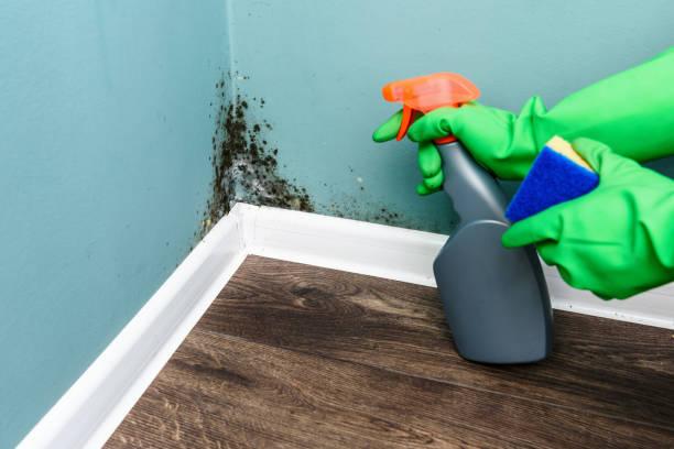 spray fles en spons in de buurt van zwarte schimmel muur - meeldauw stockfoto's en -beelden