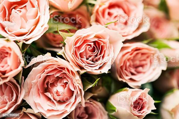 Spray roses picture id624289694?b=1&k=6&m=624289694&s=612x612&h=wbogmp  aynf11qkziu5zxu7hmrjvkjbh5e8jrzkm3e=