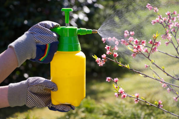 Spraying a blooming fruit tree against pests Woman with gloves spraying a blooming fruit tree against plant diseases and pests. Use hand sprayer with pesticides in the garden. pest stock pictures, royalty-free photos & images