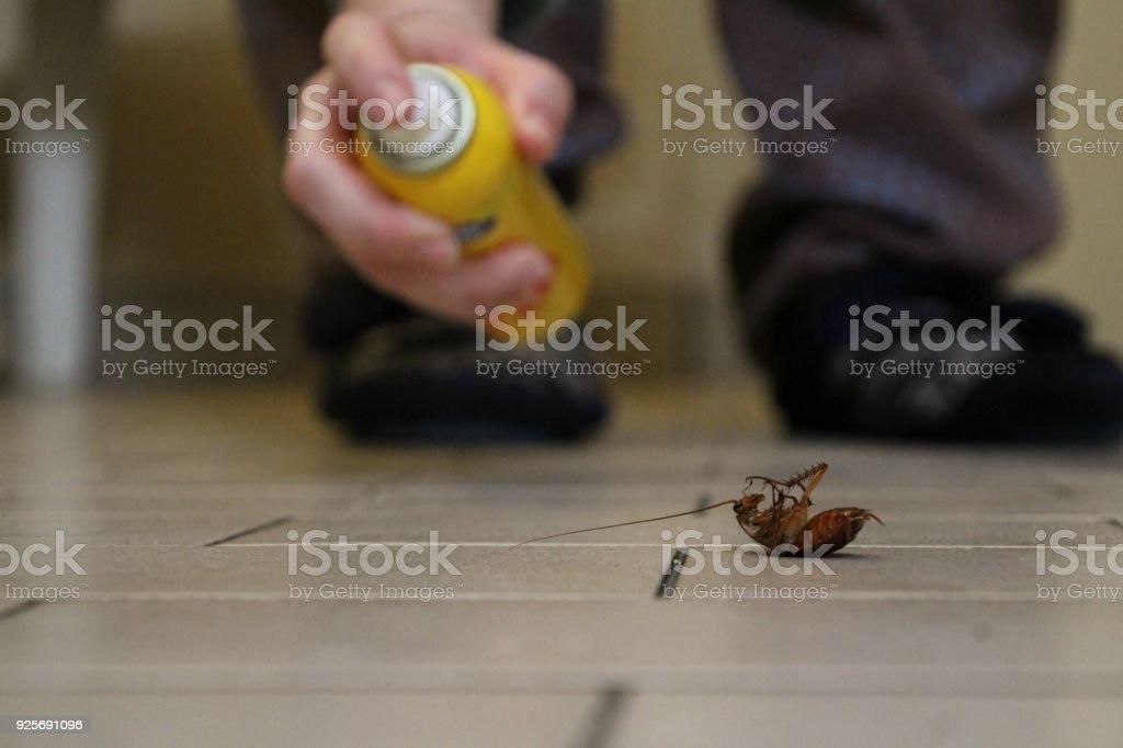 Spraying a cockroach stock photo