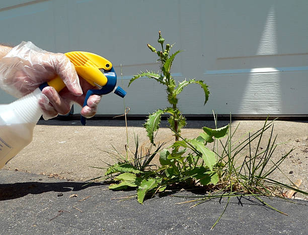 Spraying a Weed  herbicide stock pictures, royalty-free photos & images
